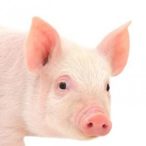 productos-cerdo